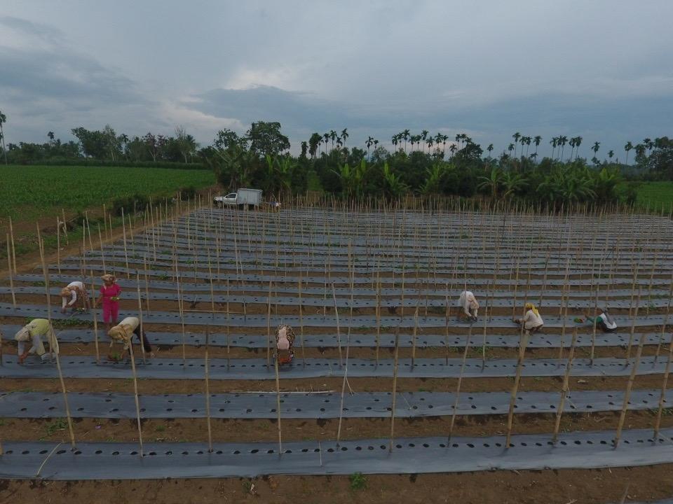 Focus Farm, Lahan Pertanian Hasilkan Komoditas untuk Menjaga Imunitas Tubuh saat Pandemi Covid-19